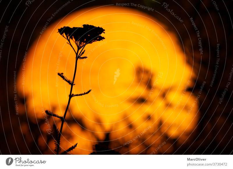 Hintergrund zum Thema Afrikanische Safari Dämmerung Pflanzen bei Nacht afrikanischer Hintergrund Safari-Hintergrund afrikanische Safari afrikanische Landschaft