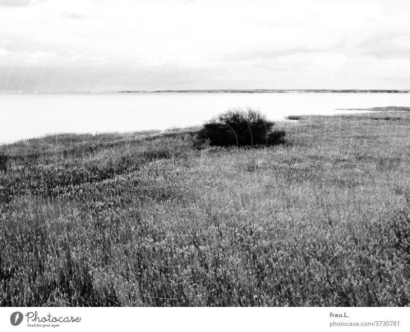 Ein See wie Milch. Gräser Busch Wolken Himmel Sonnenlicht Landschaft Schilfgras Ferien & Urlaub & Reisen Tourismus Umwelt Wasser