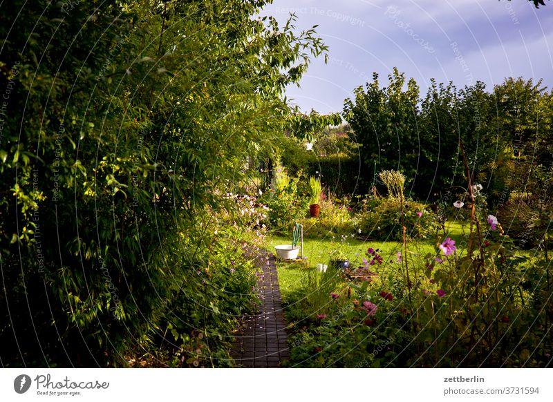 Gärtchen am Abend ast baum blume blühen blüte erholung ferien garten gras himmel kleingarten kleingartenkolonie menschenleer natur pflanze rasen ruhe