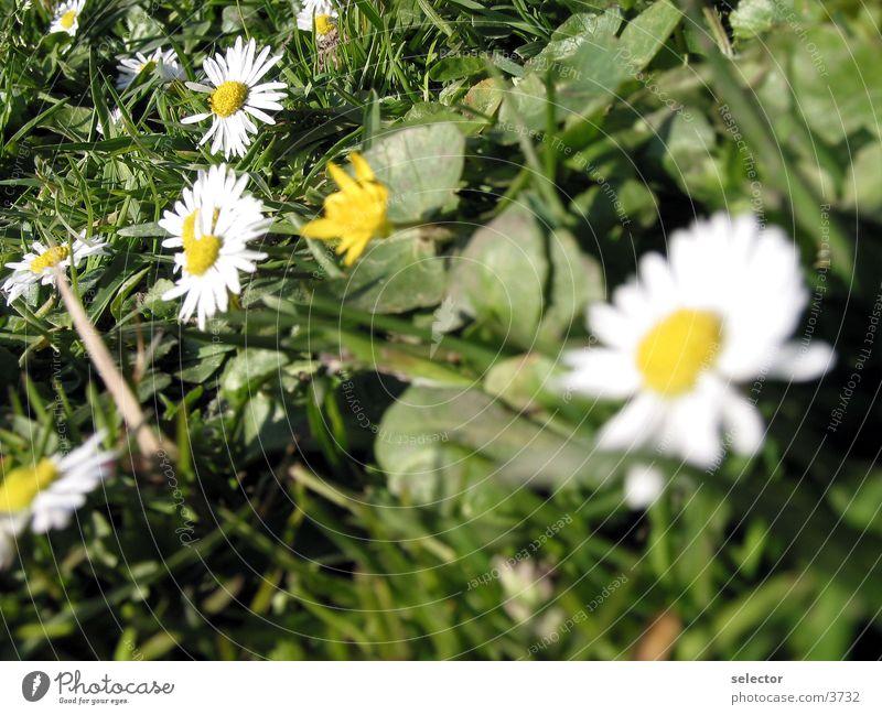wiese-blumen Natur Blume Wiese Frühling