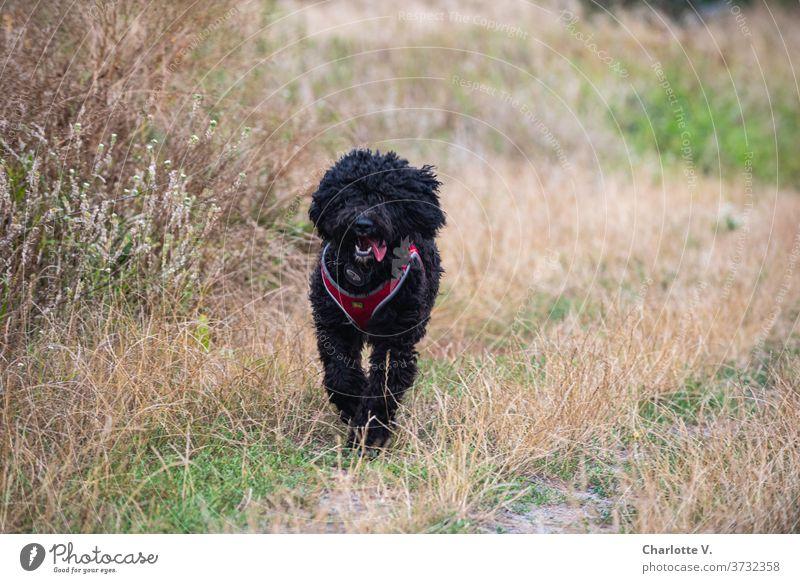 Vorfreude | Gleich gibt´s ein Leckerli! Hund laufen Tier Haustier Säugetier Außenaufnahme Farbfoto Spaziergang Natur Tierporträt Wiese Gras Tag Sommer niedlich