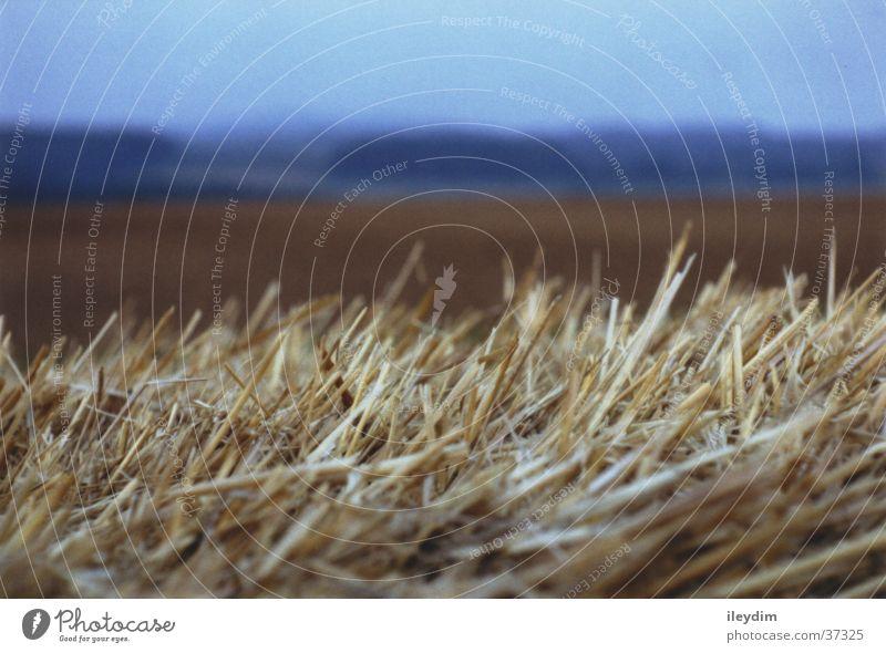Stroh Feld Tiefenschärfe Stroh Brennpunkt