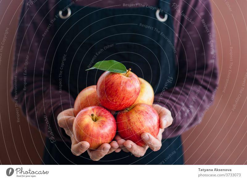 Mann Gärtner in Schürze mit frischen Äpfeln Apfel Ernte Gartenarbeit Frucht Herbst Ackerbau Landwirt Lebensmittel reif Kommissionierung organisch Gesundheit