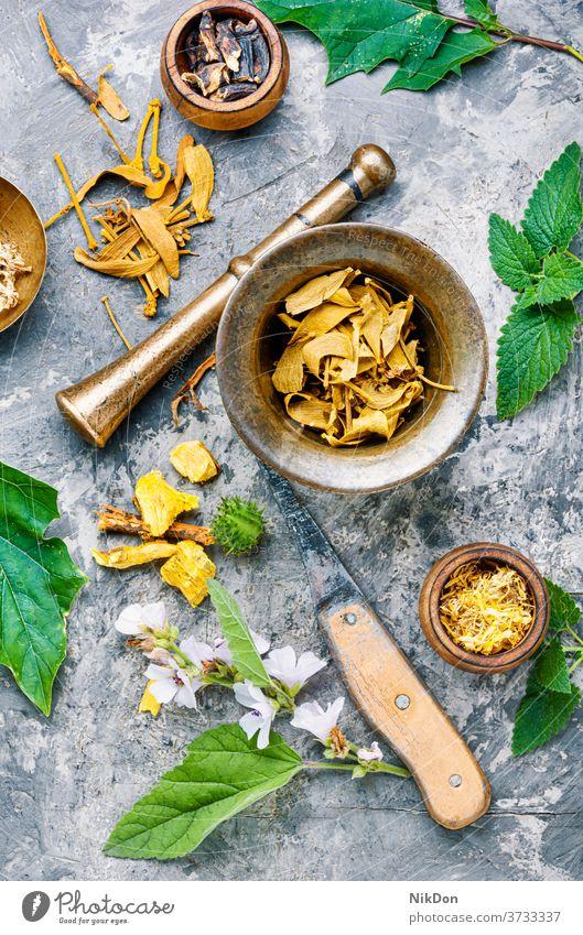 Verschiedene Heilkräuter und Blumen Kraut Medizin Kräuterbuch Minenwerfer Pflanze Gesundheit alternativ Ringelblume Stössel medizinisch Wurzel Behandlung