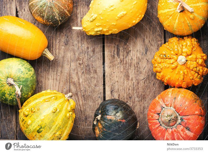 Sortiment von Herbstkürbissen Kürbis fallen Saison Ernte Gemüse saisonbedingt Dekoration & Verzierung herbstlich Natur Oktober Squash Farbe natürlich Tisch
