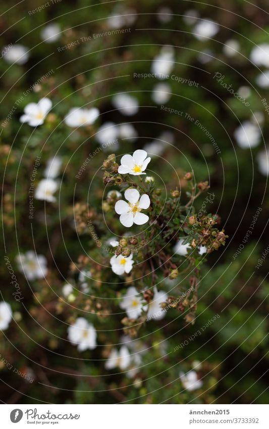 helle Blüten auf einer Pflanze der Hintergrund ist dunkelgrün Natur Herbst Sommer Frühling blühend Farbfoto Blume Menschenleer Außenaufnahme Garten Blatt Wiese