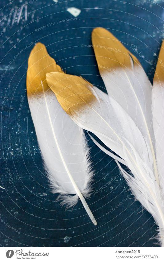 Vier weiße Federn mit goldener Spitze auf einem dunkelblauen Untergrund Vogel Dekoration Innenaufnahme menschenleer Tier Natur Farbfoto schön edel basteln