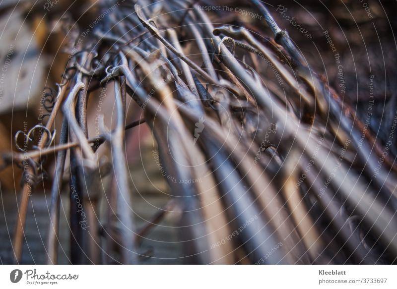 Getrocknetes Weinrebenbündel als Dekoration am Insektenhotel getrocknete Pflanze Natur Nahaufnahme Detailaufnahme Makroaufnahme braun Außenaufnahme
