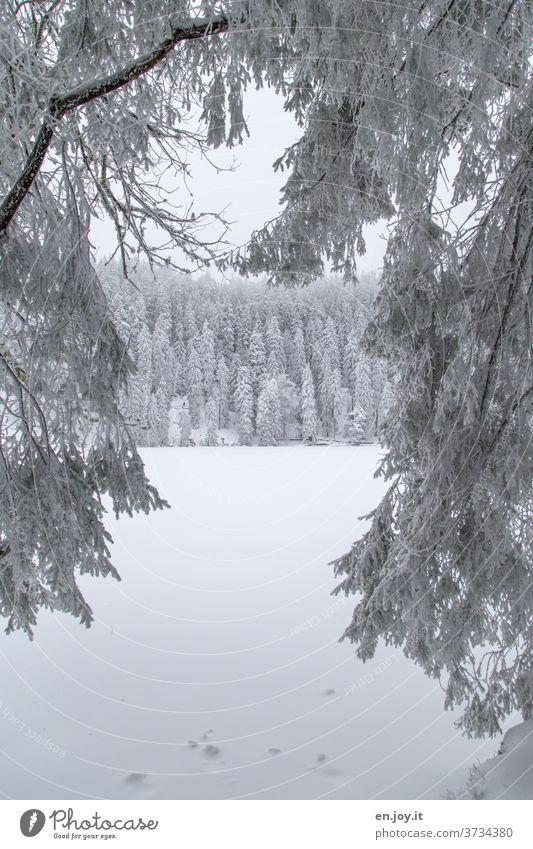 nicht mehr soooo weit weg - verschneite Tanne Baum Schnee Eis Winter Nadelbaum schneebedeckt Winterlandschaft weiß Nebel kalt Frost eisig schlechtes Wetter