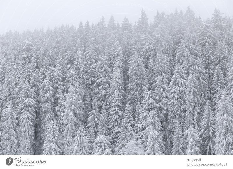 Schnee is schee Winter Tannen Bäume Wald Schneelandschaft Winterstimmung Winterurlaub Wintertag Winterwald kalt Frost frostig Nadelwald Nadelbäume Schwarzwald
