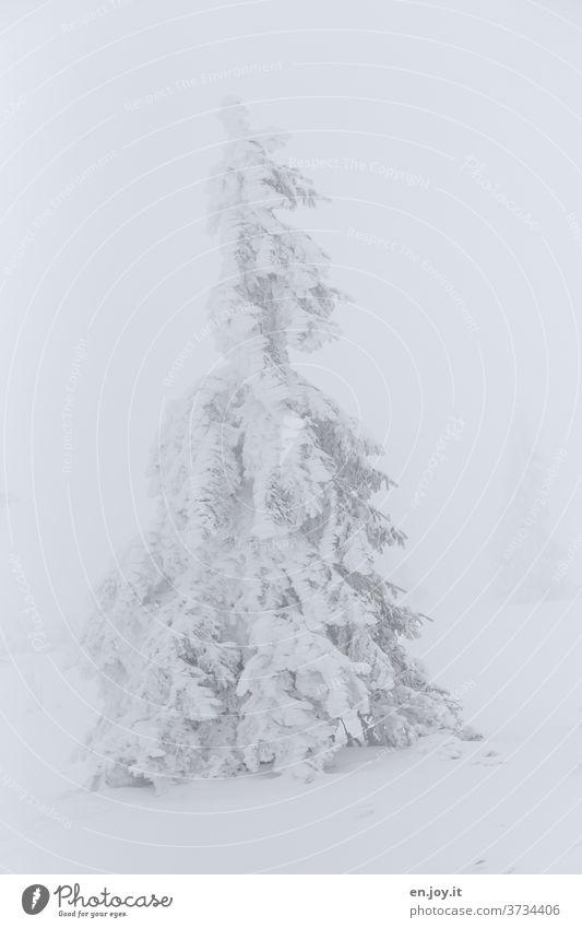 nicht mehr soooo weit weg - verschneite Tanne Baum Schnee Eis Winter Nadelbaum schneebedeckt Winterlandschaft weiß Nebel kalt Frost eisig eins schlechtes Wetter