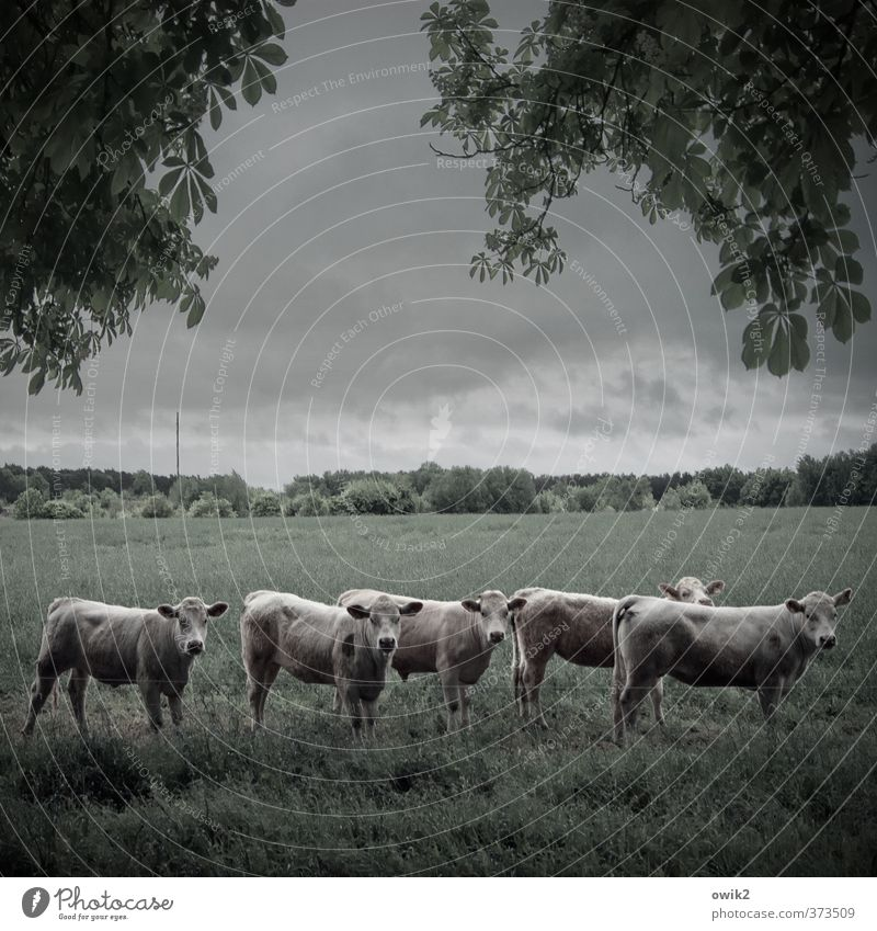 Die halbstarken Fünf Himmel Natur Pflanze Baum Landschaft Wolken Tier Wald Umwelt Wiese Gras Horizont Feld stehen warten groß