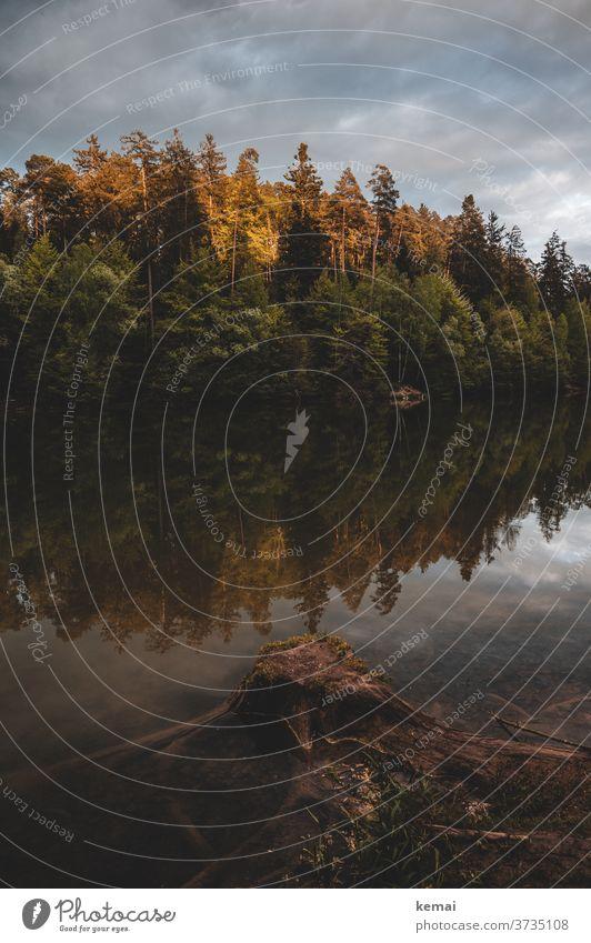 Abendstimmung am See mit Baumstumpf und Wald Wasser Spiegelung Wasseroberfläche glatt Herbst herbstlich Herbstfarben Himmel Wolken dunkel farbig