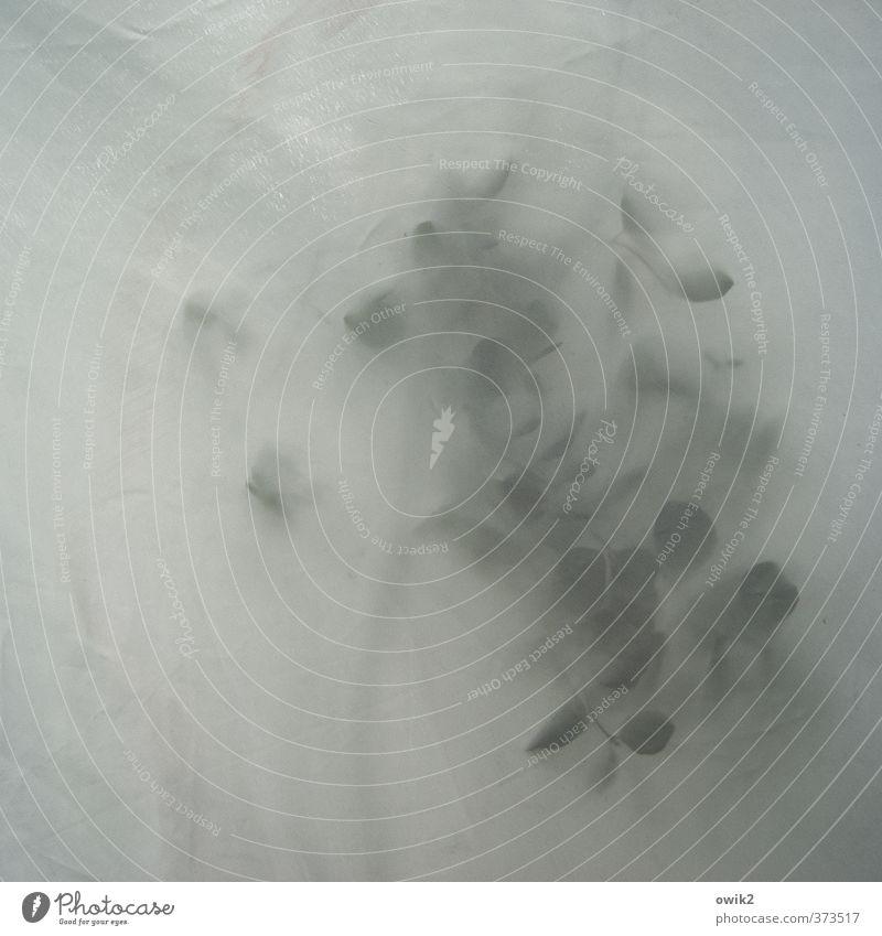 Andeutung Natur Pflanze Baum Blatt Bewegung grau hell berühren Schutz Kunststoff Textfreiraum Zweig durchsichtig Grünpflanze Abdeckung Wetterschutz