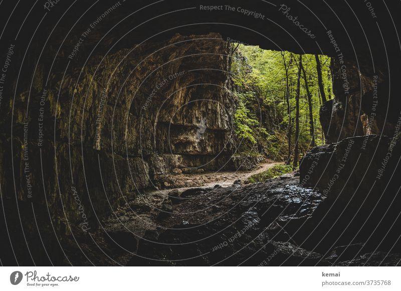 Blick aus einer Höhle Falkensteiner Höhle Schwäbische Alb Ausgang Eingang Höhleneingang dunkel düster grün Baum Wald Stein Licht Menschenleer Außenaufnahme