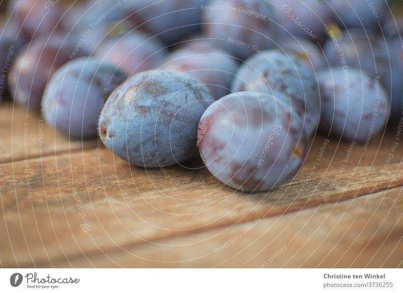 gerade geerntete Pflaumen / Zwetschgen liegen auf einem älteren Holztisch Hauszwetschge Ernte frisch eigene Ernte Garten Holzuntergrund Frucht reif Natur Obst
