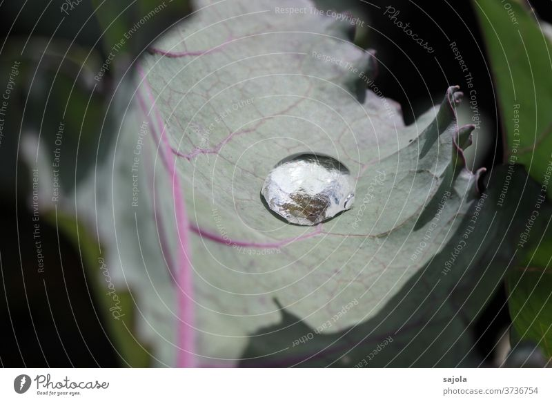 gehalten - Wassertropfen auf Kohlrabiblatt Blatt grün Makroaufnahme Pflanze Nahaufnahme nass Reflexion & Spiegelung Grünpflanze Farbfoto Sommer Blattadern