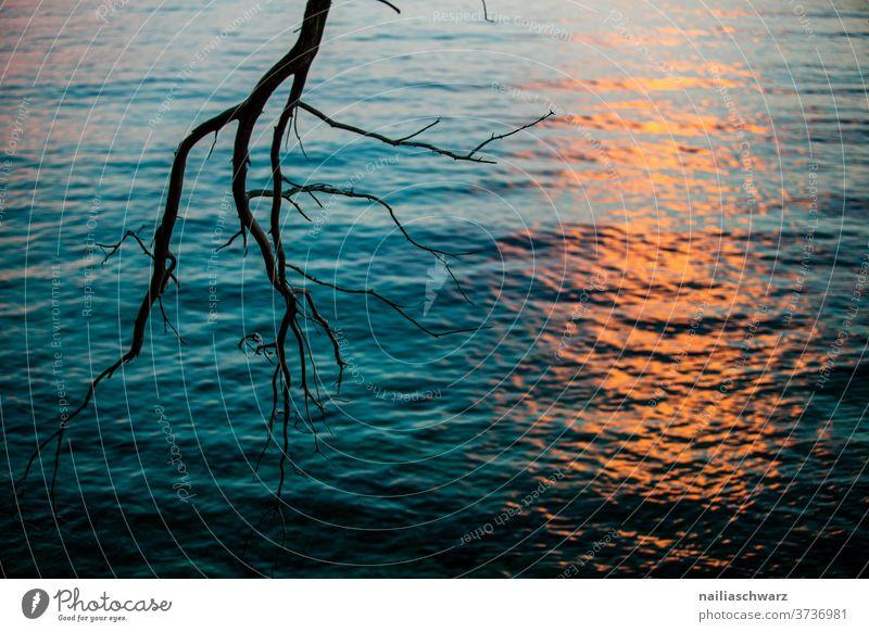 Sonnenuntergang in Kroatien Ast Baum Meer Wasser Meereslandschaft Sonnenlicht Abenddämmerung Abendsonne Abendstimmung Landschaft Wege & Pfade strahlend