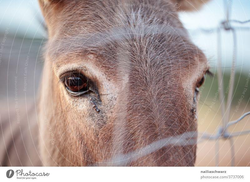 Tierporträt Esel Landwirtschaft grau Tiere Viehbestand Haustier ländlich niedlich Natur Säugetier Bauernhof Auge Wimpern Kopf Zaun Nahaufnahme Nutztier