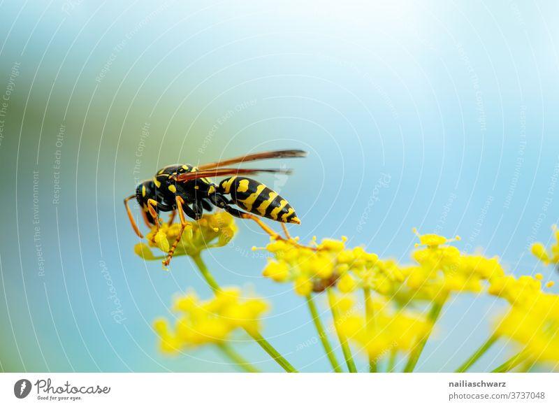 Wespe Wespen Insekt Ganzkörperaufnahme Tierporträt Kontrast Licht Detailaufnahme Nahaufnahme Außenaufnahme Farbfoto Nektar schwarz gelb Flügel Biene Wildpflanze