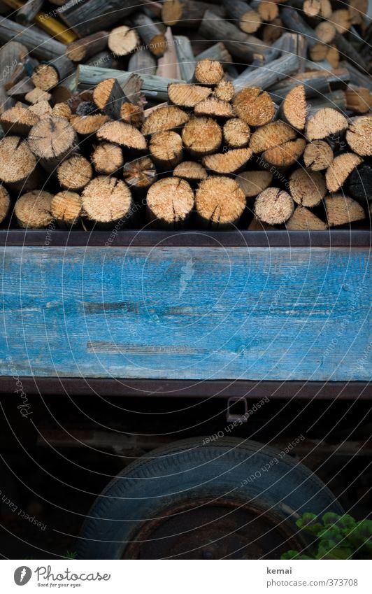 Holz auf Holz Anhänger Wagen Reifen Brennholz viele blau aufgeschichtet Stapel Holzstapel Farbfoto Gedeckte Farben Außenaufnahme Nahaufnahme Menschenleer Tag