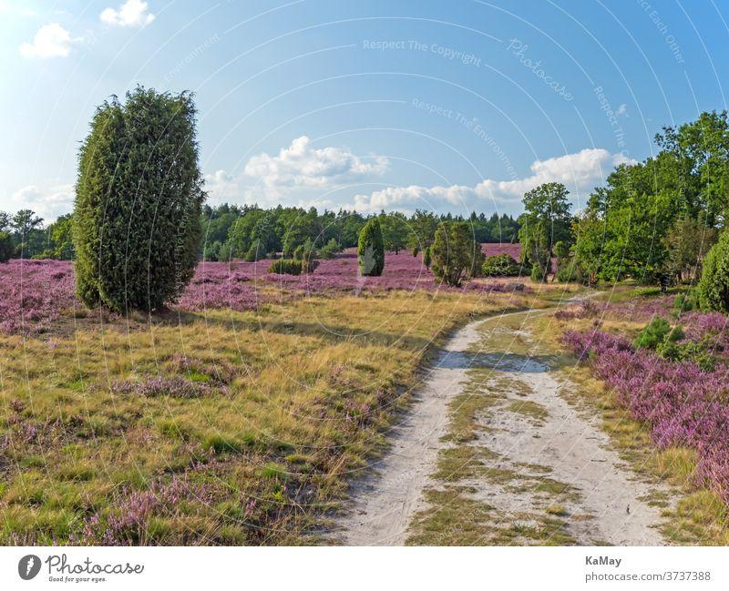 Wanderweg in der Lüneburger Heide, Niedersachsen, Deutschland Landschaft Heidekraut Heideblüte Tourismus deutsch Weg Wandern Naturschutzgebiet Sommer Reise