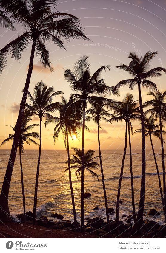 Wunderschöner tropischer Sonnenuntergang mit den Silhouetten von Kokospalmen. Natur MEER Sommer Meer Strand Kokosnuss Handfläche Baum Flucht reisen Horizont
