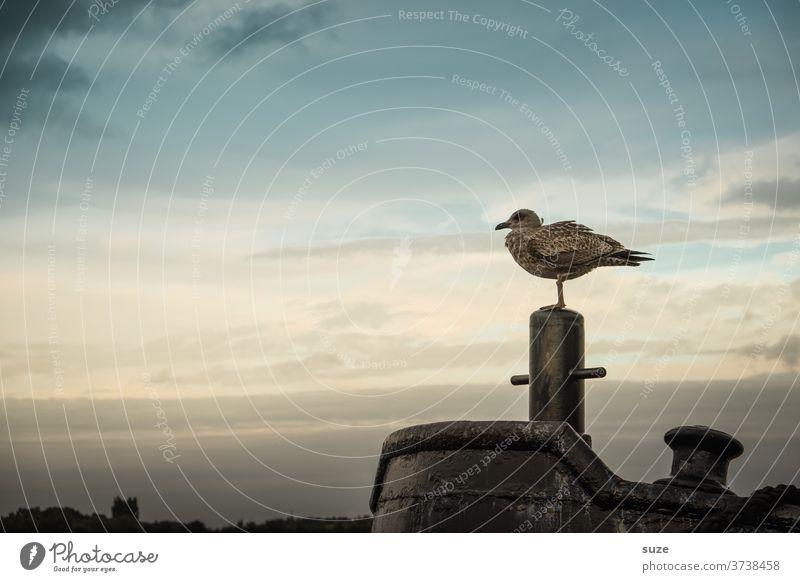 Jetzt 'n Fischbrötchen - das wärs ruhig Meer Hafen Umwelt Natur Tier Luft Wasser Himmel Klima Wetter Küste Ostsee Wildtier Vogel sitzen warten authentisch