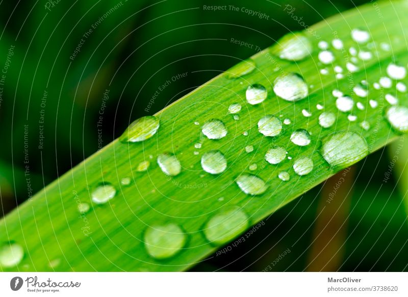 Grashalm mit Wassertropfen darauf Wassertropfen auf Gras Gras-Wassertropfen Regentropfen Gras mit Regentropfen Gras-Regentropfen grün Tau Natur Tropfen Blatt