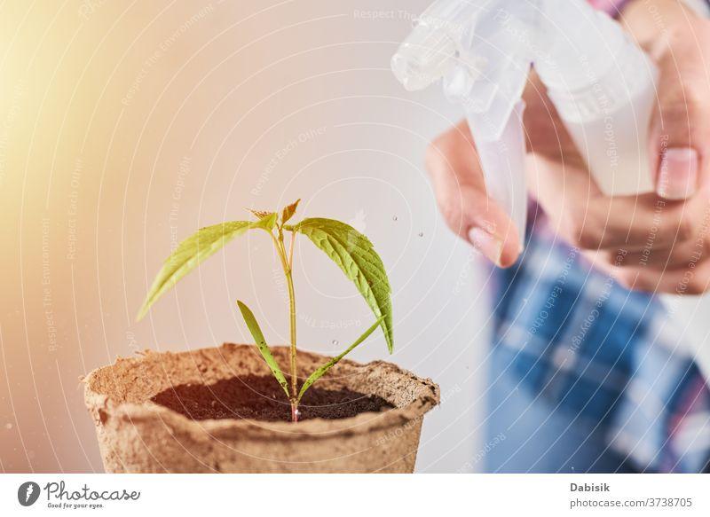 Frau sprüht Wasser auf Pflanze im Topf Pflege Spray grün Blume Leben Gartenarbeit Natur Blatt Hintergrund Boden Hand kultiviert Beginn Haus Keimling heimwärts