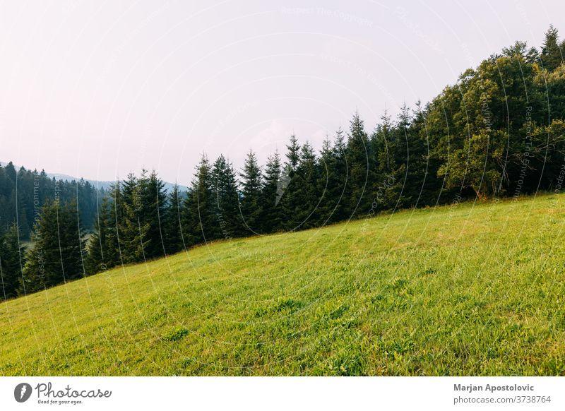 Blick auf den Kiefernwald in den Bergen am Abend Abenteuer Hintergrund Land Landschaft Umwelt Europa Immergrün erkunden Feld Wald frisch Gras Grasland wandern