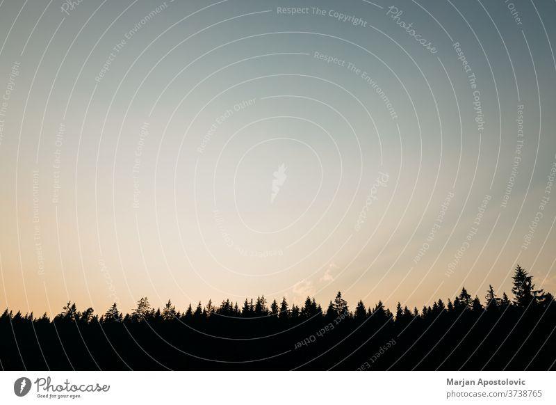Wunderschöner Sonnenuntergang über dem Latschenkiefernwald Abenteuer Hintergrund Schönheit blau Windstille Cloud farbenfroh Morgendämmerung dramatisch
