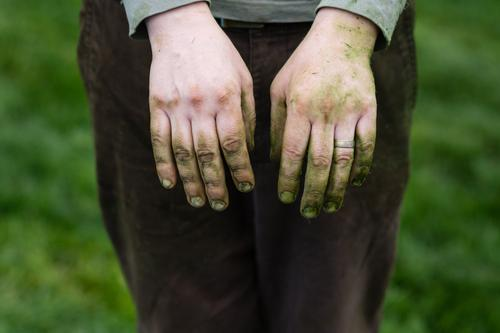 die grasbefleckten Hände eines Gärtners grün Fleck gefärbt Grasfleck Landschaftsgärtner Ehering verheiratet Knöchel Rasen dreckig Fingernägel Männerhände