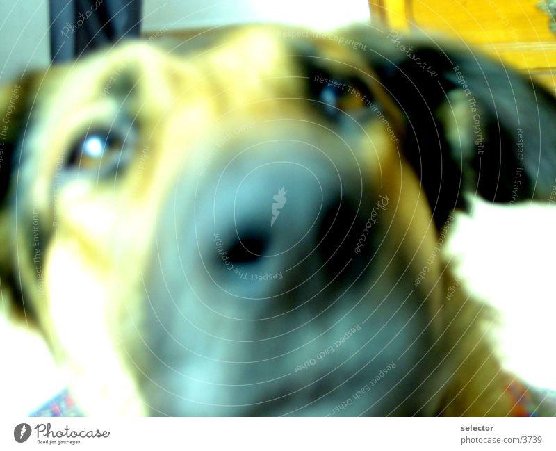hund Tier Hund