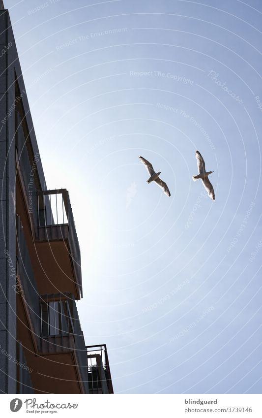 Meeuwen en balkons in Zeebrugge Möwen Balkon Geländer Himmel fliegen Urlaub Urlaubsstimmung Fernweh Sehnsucht Promenade Strandpromenade Meer Küste Außenaufnahme