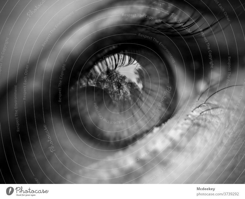 Augen... ein Spiegel für Ihre Seele Modellierung schießen Schießen Frau Frauen weiblicher Mensch Wald Porträt Mädchen Schönheit schön jung hübsch attraktiv