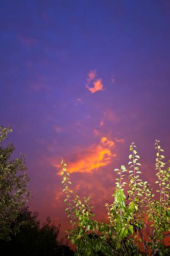 Bunte Wolke mit angeblitztem Pflaumenbaum abend ast dunkelheit erholung ferien garten himmel kleingarten kleingartenkolonie klima klimawandel menschenleer nacht