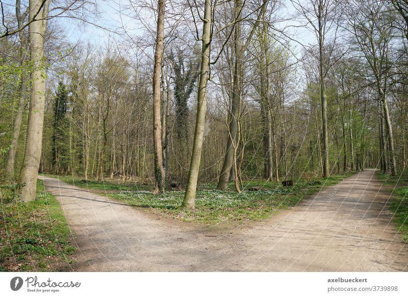 Gabelung in einem Waldweg Abzweigung Kreuzung Weg Wahlmöglichkeit Optionen Metapher Konzept Strategie Verzweigung Waldgebiet Feldweg Natur Landschaft niemand
