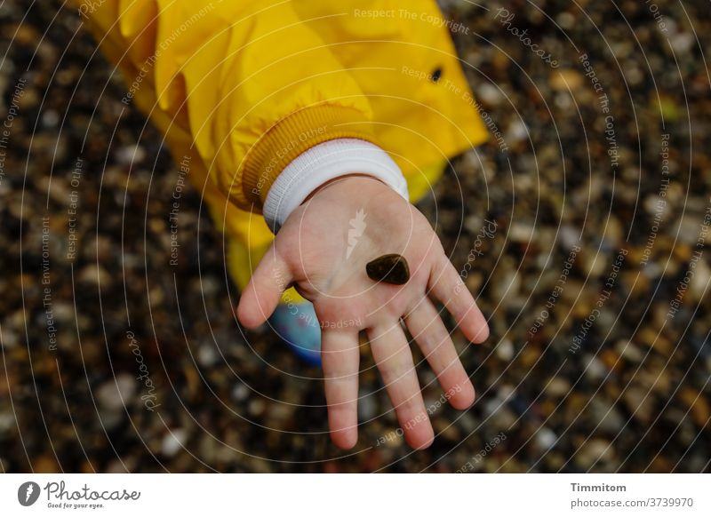 2000. Die kleinen großen Freuden Stein Kinderhand Kleinkind Handfläche zeigen Jacke Kiesstrand Finger Spielen 1 Schwache Tiefenschärfe 1-3 Jahre Bodensee Enkel