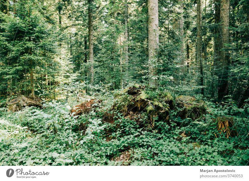 Blick auf den tiefen Wald in den Bergen Abenteuer Hintergrund schön Tag Ökologie Ökosystem Umwelt erkunden Laubwerk grün wandern Dschungel Land Landschaft Blatt