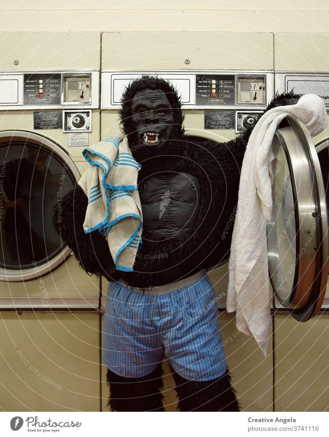 Verantwortungsbewusster Gorilla beim Wäschewaschen bizarr Tracht lustig Humor im Innenbereich Waschsalon Wäscherei Leben Lifestyle Blick Maschine Mundschutz
