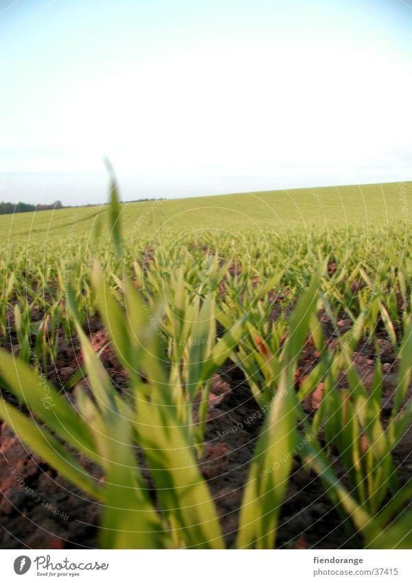 grasgeflüster Himmel Gras