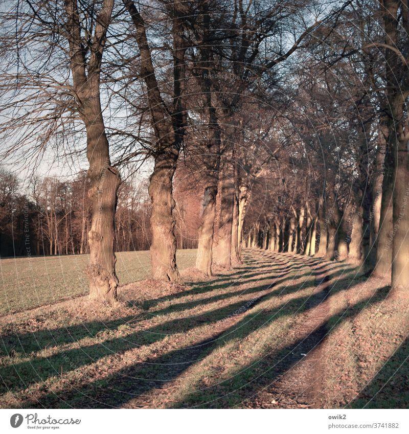 Gestreifte Allee Landstraße Wege & Pfade Bäume Sonnenlicht Spalier leuchten leuchtende Farben Kurve Schatten gleichmäßig Feld Feldrand Acker Wald Idylle