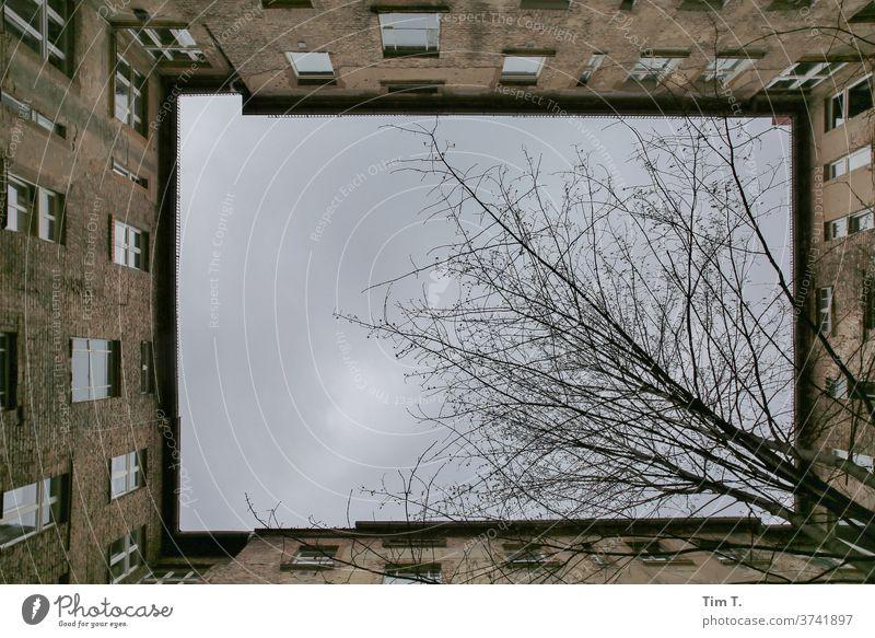 ein Blick in den Himmel Hinterhof Berlin Altbau Baum Blick nach oben Menschenleer Haus Stadt Stadtzentrum Fenster Altstadt Hauptstadt Tag Außenaufnahme