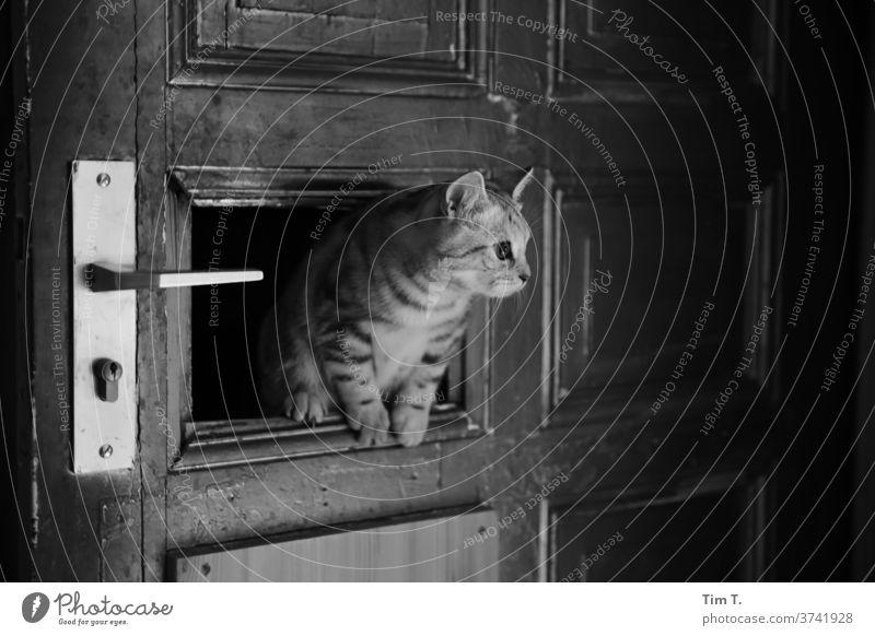 Einbrecherkatze Katze Tür Wohnung Monochrom Innenaufnahme Menschenleer Tierporträt Haustier 1 niedlich Tierliebe Neugier Tiergesicht Häusliches Leben