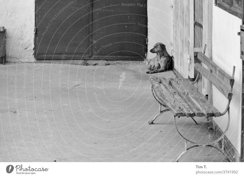 Streunender Hund dog Sofia Bulgarien s/w Schwarzweißfoto Tag Außenaufnahme Menschenleer Stadtzentrum Hauptstadt Europa Altstadt Altbau Gebäude Tier Bank Bahnhof