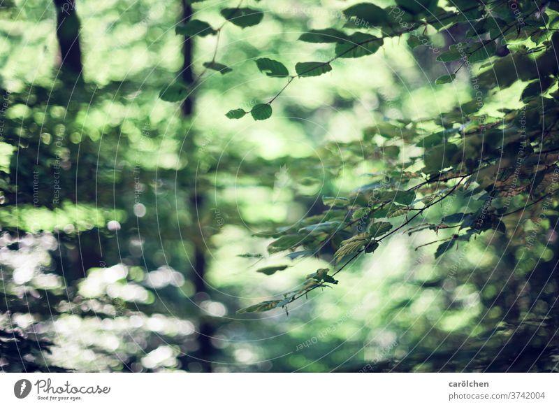 Waldstimmung Zweige u. Äste grün Natur unscharf Waldflair Bokeh