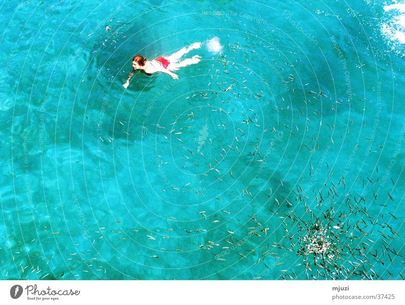 Fisch-Suppe Wasser blau Ferien & Urlaub & Reisen Freiheit Ausflug türkis Schifffahrt