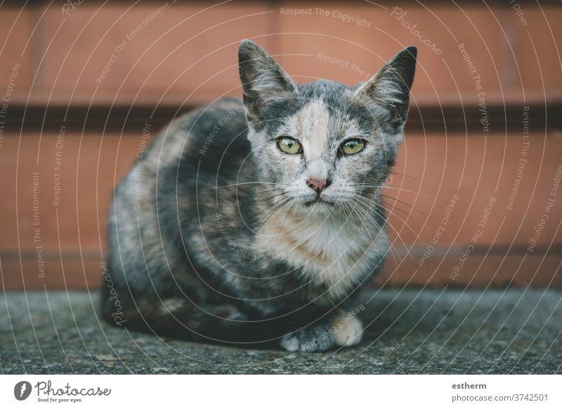 kleine streunende Katze auf der Straße Kätzchen katzenhaft heimisch Irrläufer heimatlos Katzenbaby Tier niedlich Haustier Baby verirrt im Freien allein urban