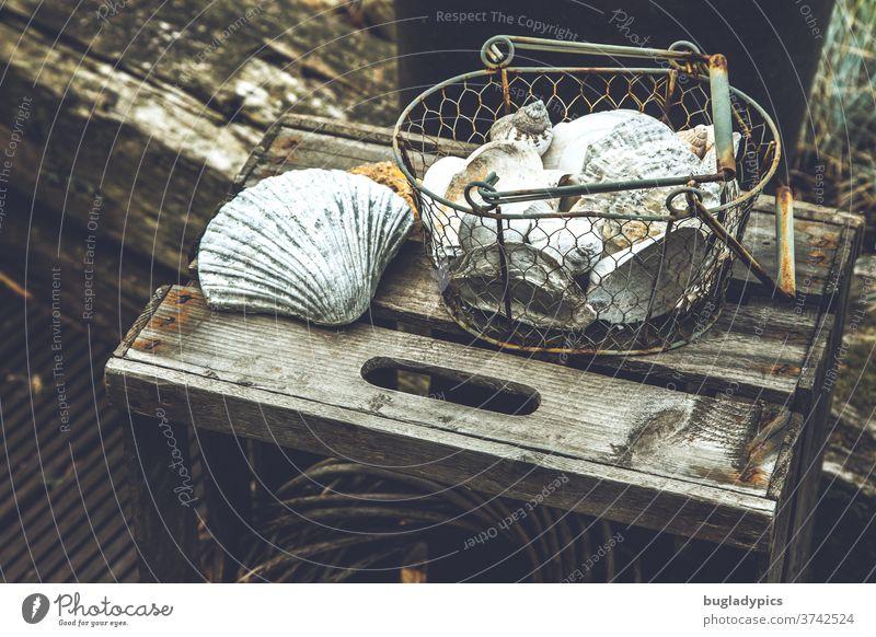 Rostiger Metallkorb mit Muscheln auf einer alten Obstkiste draußen im Garten zur Dekoration muscheln muscheln sammeln metallkorb Korb Vintage Vintage Stil